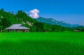 Vẻ yên bình chân núi bạt ngànxanh ngắt cánh đồng lúa